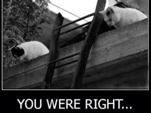 Cats logic lol