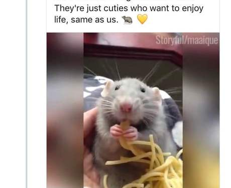 Why can't you just laugh at a rat eating pasta