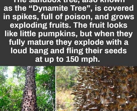 This is a dynamite tree