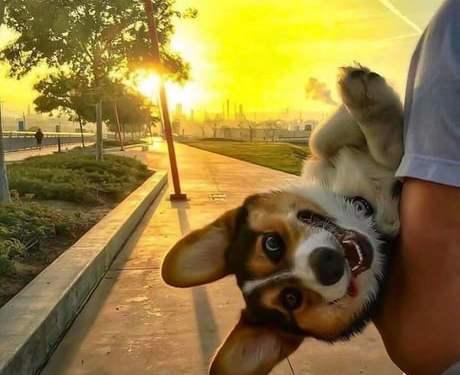 He likes morning walk
