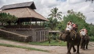 bali_elephant_camp4