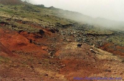 Área do Poço da Neve (entre os 1600 e os 1700 metros de altitude) em setembro de 1995, quando começou o processo de retirada do gado do Parque Ecológico do Funchal.