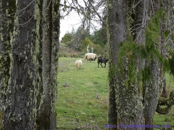 ovelhasovelhas 3oovelhas 2