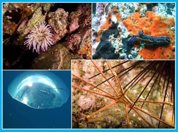Mundo subaquático madeira1