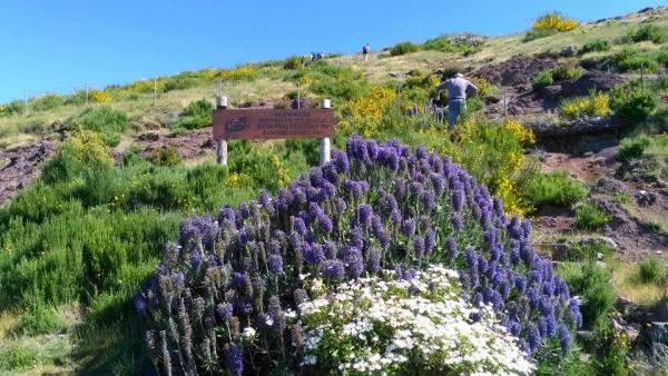 Foto: Associação dos Amigos do Parque Ecológico do Funchal