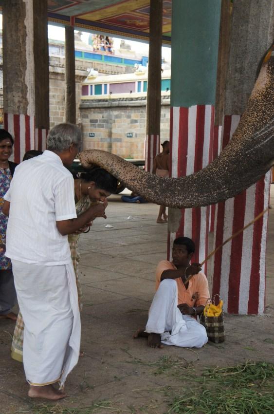 Elefante abençoa com a tromba