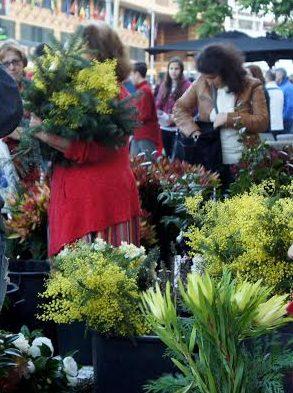 Câmara do Funchal perde recurso num caso de adjudicação de um espaço para venda de flores no Mercado dos Lavradores