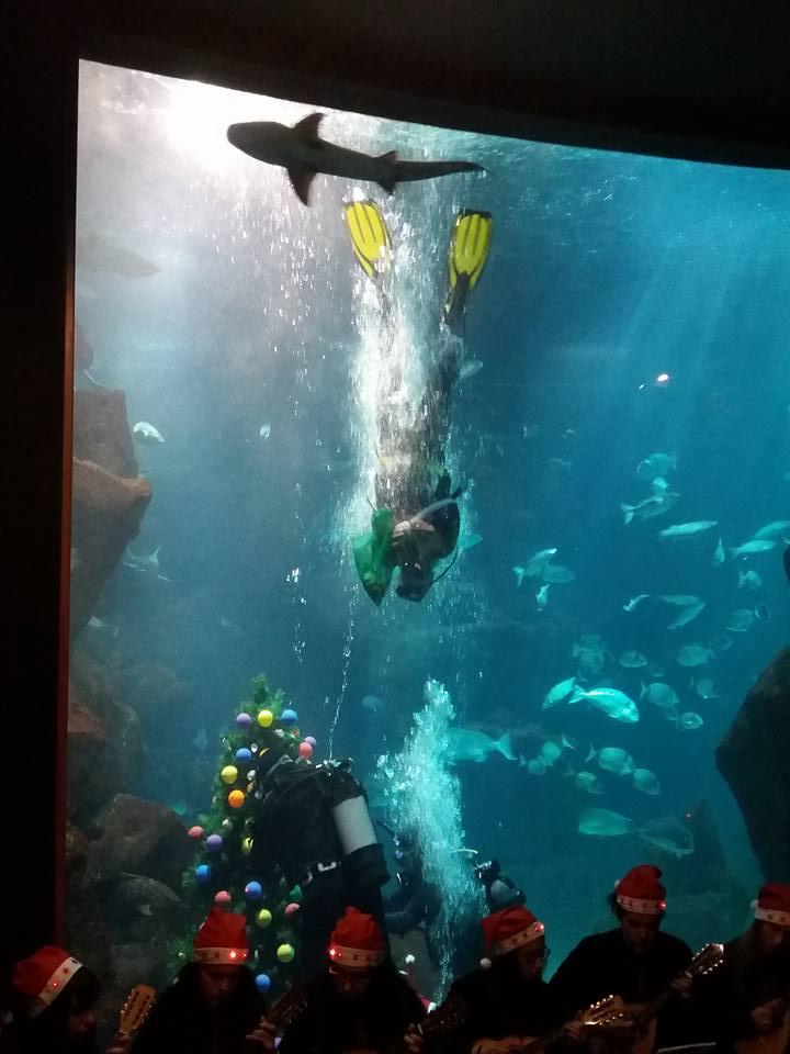 Árvore no aquário C