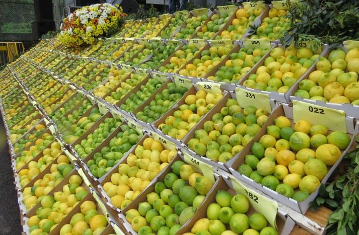 Limão Festa