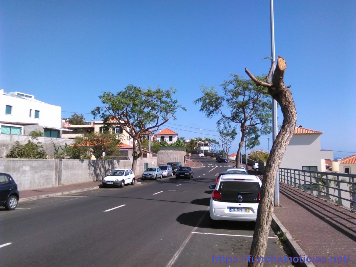 Estepilha! Que mal fez esta pobre árvore?
