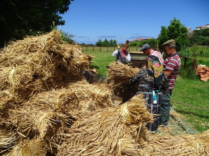 Debulha de trigo Parque