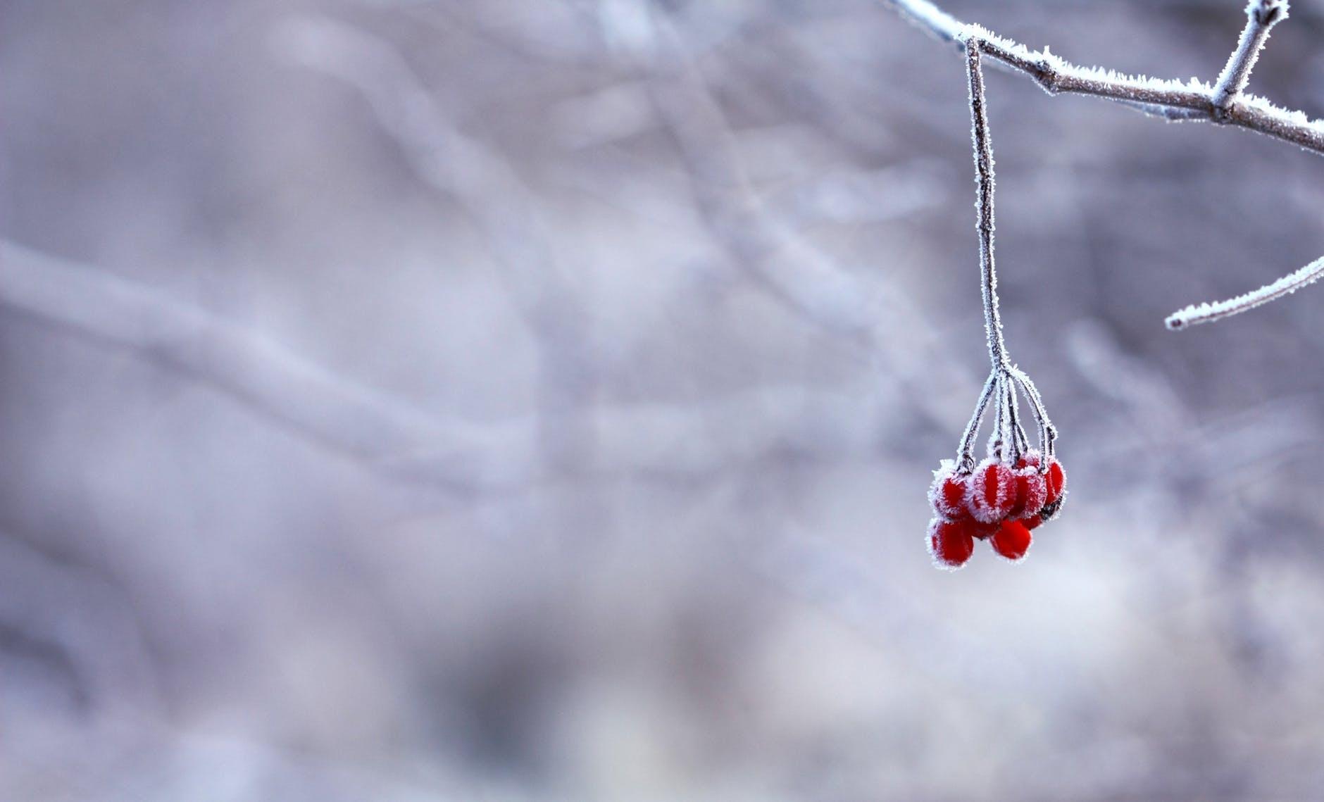 Fruto de invierno
