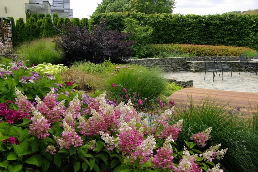 ogród muszla pracowni sztuki ogrodowej, która zaprojektuje nasz ogród społeczny w Trójmieście