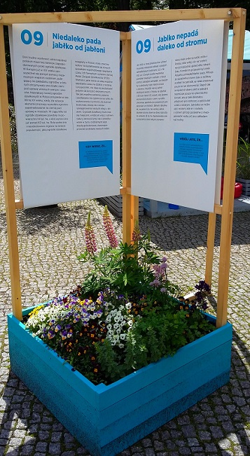 byliny w skrzyni w ogrodzie społecznym w cieszynie