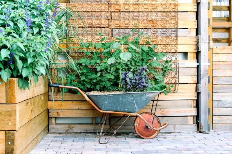 taczka jako donica na rośliny w ogrodzie społecznym