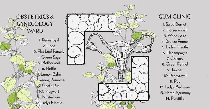 mapa leczniczych roślin w ogrodzie społecznym