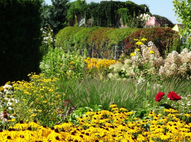 ogrody kapias - słoneczna rabata