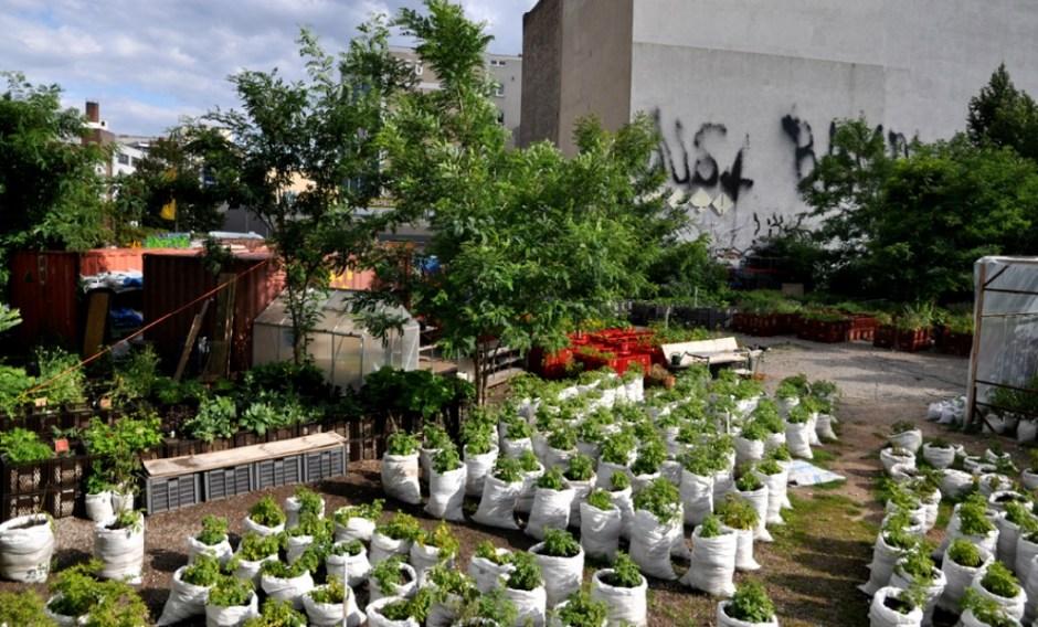 worki z ziemią i warzywami - widok z góry na ogród społeczny w Berlinie