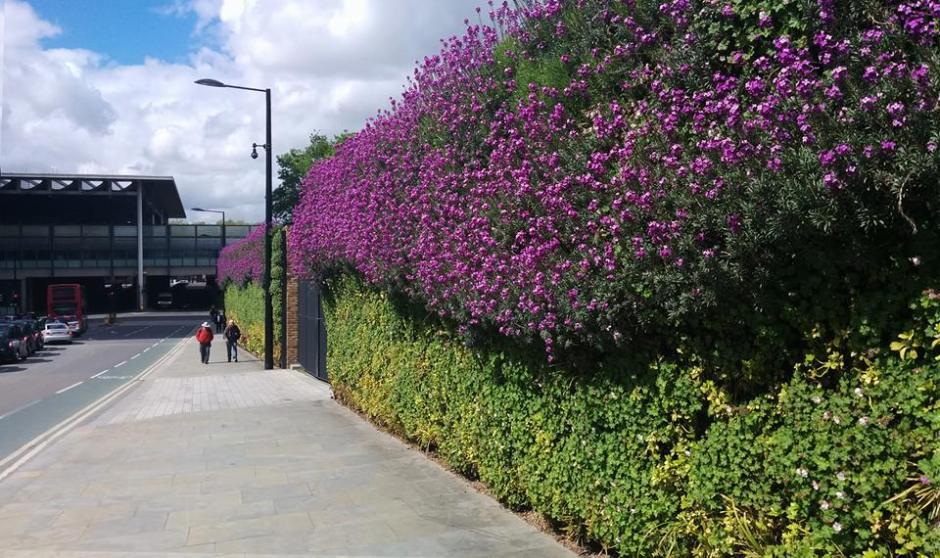zielona ścina pełna kwiatów londyn