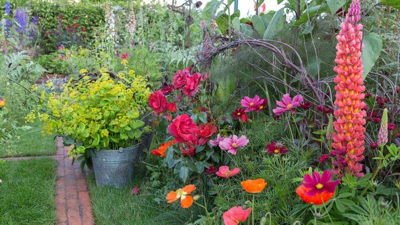 czerwona rabata - ogrody londyn chelsea 2017