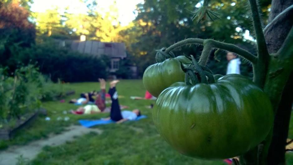 joga w warszawskim ogrodzie społecznym