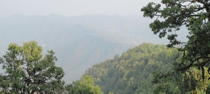 Feeling At One with Nature: At Binsar Wildlife Sanctuary, Uttarakhand