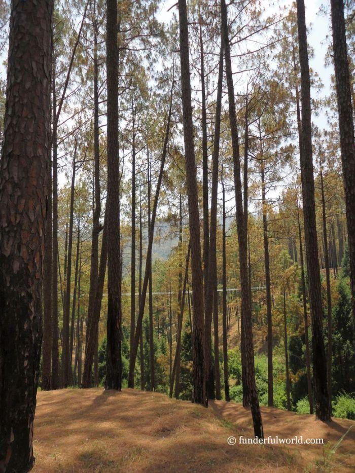 Picnic spot! Ranikhet, India.