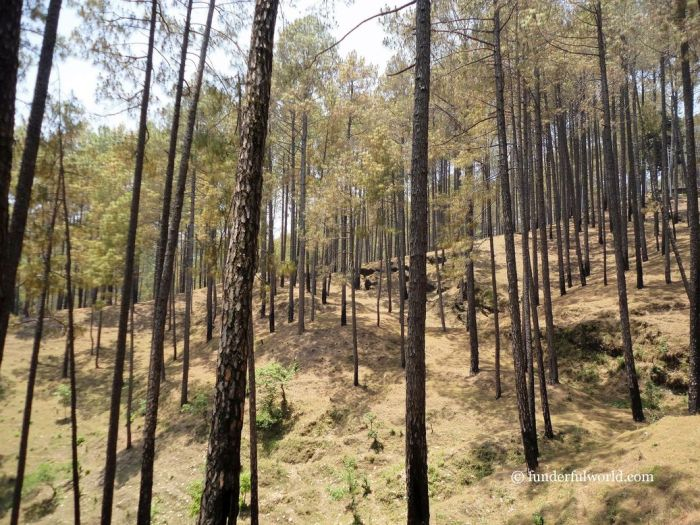 Find a trail. Ranikhet, India.