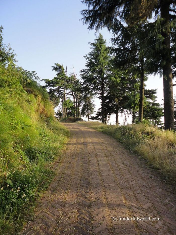 Choose your path. Mukteshwar, Uttarakhand, India.