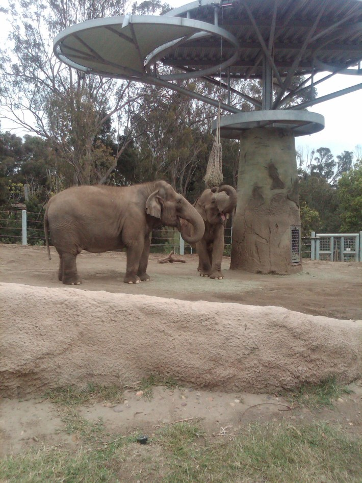 San Diego Zoo vs Safari Park