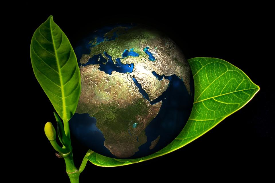 La Responsabilidad Social Corporativa piensa en verde