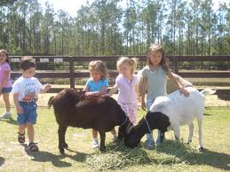 Pony Rides And Petting Zoo Rentals For Children S Birthday Parties Fun Factory Parties