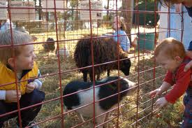 Birthday Party Mobile Petting Zoo Rentals Fun Factory Parties