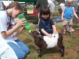 Petting Zoo Birthday Party Rentals For Kids Fun Factory Parties