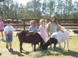 L A Los Angeles Pony Ride Petting Zoo Rentals Fun Factory Parties