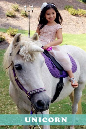 Rent Birthday Ponies In Los Angeles Fun Factory Parties