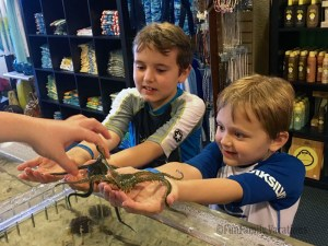Touch Tank at the Guy Harvey