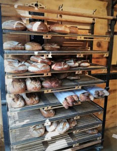 trays with many different breads