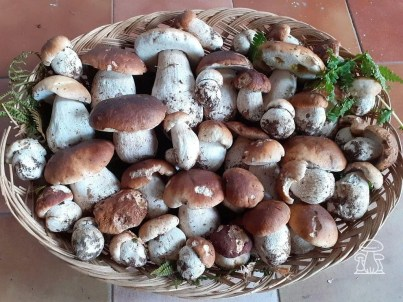 cesto di funghi porcini