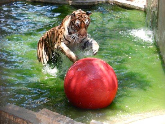 Austin Zoo Amp Animal Sanctuary Fun Junkie