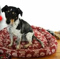 Recycling Bastelideen für Hunde