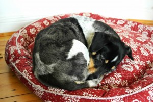 DIY Hundekörbchen selber machen