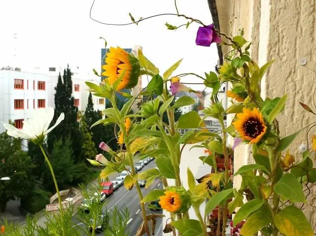 Blumen auf dem Balkon - Blumenwichteln 2013