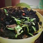 Blumenwichteln – Kleine grüne Pflänzchen