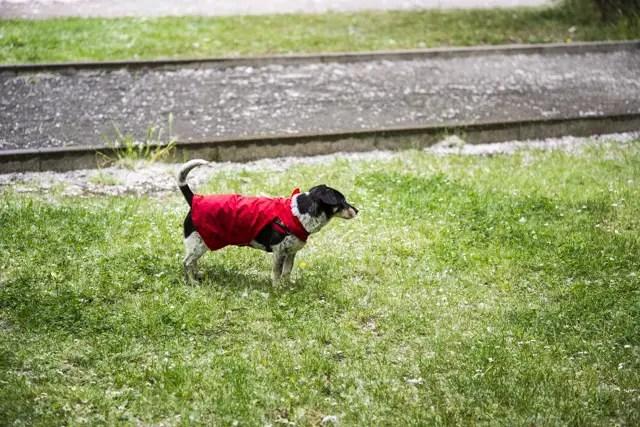 Regenmantel für Hunde - DIY