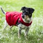 Upcycling – Aus einem Regenschirm wird ein Regenmantel für Hunde