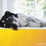 Eine neue Matratze für das DIY-Bett