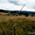 Von Baumwipfeln und Bergen im Böhmerwald