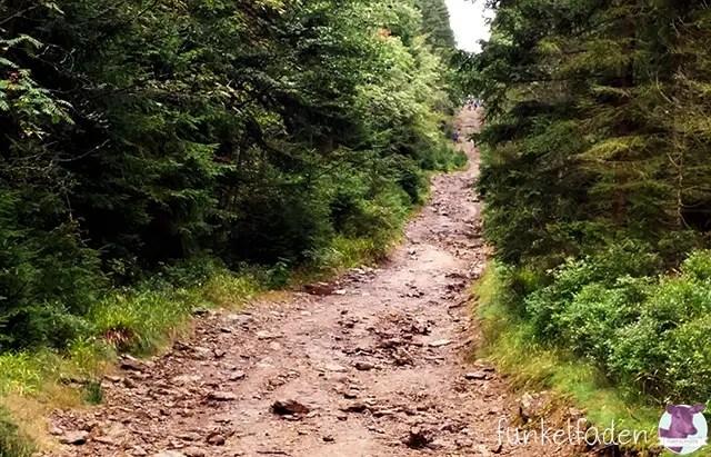 Wanderweg im Böhmischen Wald