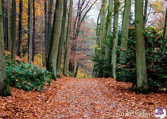 Wald bei Bad Essen